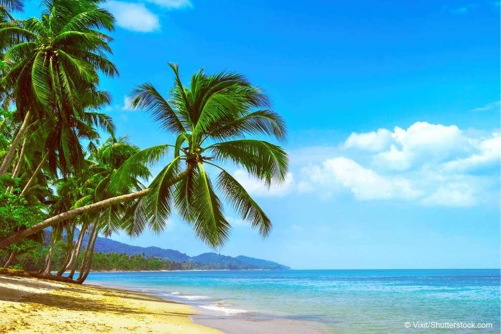 Urlaubsvertretung für den Administrator – so gehen Sie kein Risiko ein